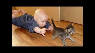 Baby and Cats Fun and Fails Funny Baby Video 2019 June