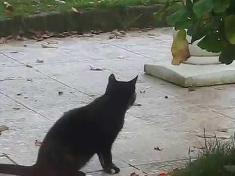 Chat qui danse avec une souris youtube - Petite souris qui danse ...