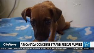Puppies repeatedly bumped off flights to forever home
