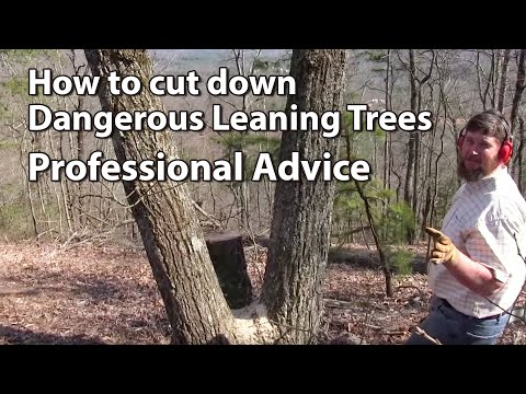 Cutting Down Dangerous Trees - Professional Advice video