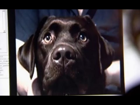 Can dogs sense emotion? - Horizon: The Secret Life of the Dog - BBC