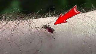 【蚊に刺される映像】見てるだけで嫌!でもちょっとみてしまう吸血シーン