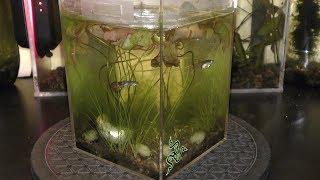 Natural Aquarium Fish Care