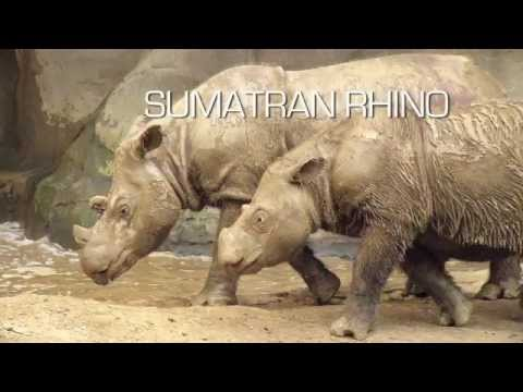 The Rhino Wars.mov