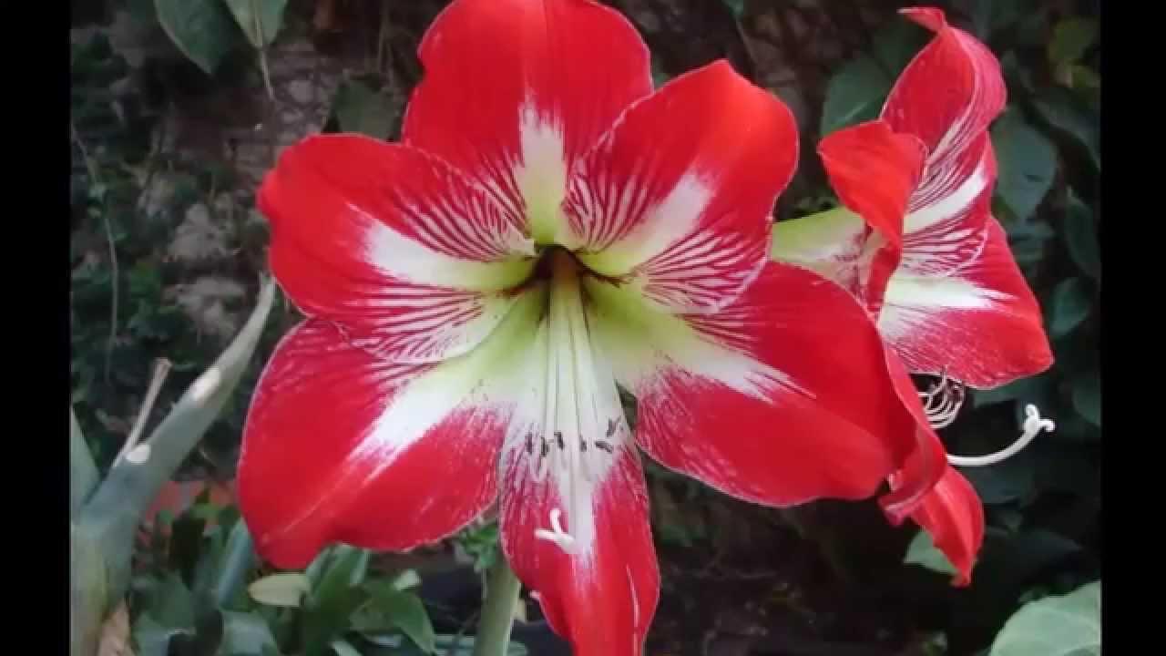 Las flores mas hermosas del mundo top 25 youtube for Las plantas mas bonitas