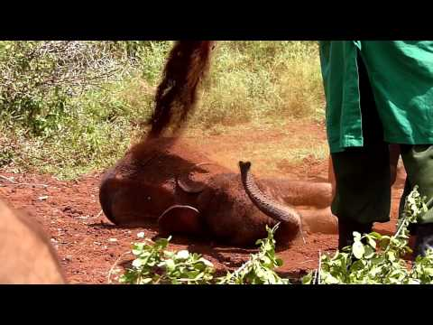 Playtime at the David Sheldrick Elephant Orphanage, Nairobi, Kenya