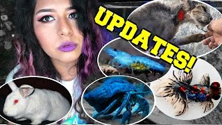 hermit crabs, NEW FISH, my bunny, new cat rescue, shrimp, & im weird