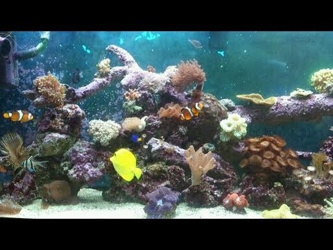 How to build a low cost 55 gallon 240 litre salt water for How to make saltwater for fish
