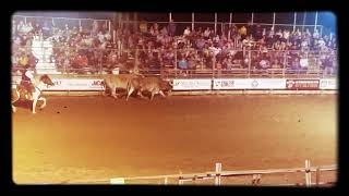 Rodeo of Huntington Pennsylvania dusty and his amazing Texas longhorns