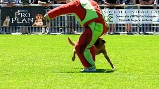 COLT AU PARADIS D'ORSY finale Ring 2011 à Tavaux, fuyante