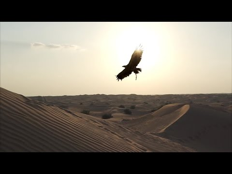 Victor the Eagle flies to the Arabian Peninsula