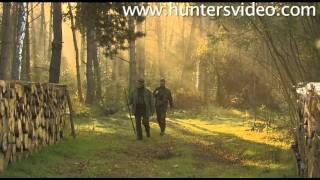 Fallow Deer and Driven Hunt - Hunters Video