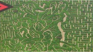 Calgary Corn Maze the
