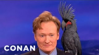 Download Song Animal Expert David Mizejewski: Black Palm Cockatoo & Crocodile - CONAN on TBS Free StafaMp3
