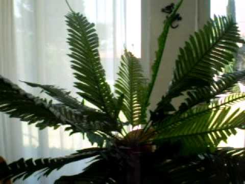 Plantas artificiales y flores y arboles economicas for Plantas de interior artificiales
