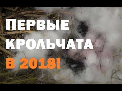 Первые крольчата 2018!//Спасение скворца .