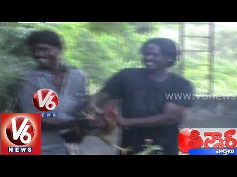 Teenmaar News - Mallanna funny talk on catching a rooster chicken...
