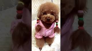Look at these cute and funny puppies dogs 3249