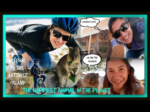 MEET THE HAPPIEST ANIMAL IN THE PLANET | QUOKKA | ROTTNEST ISLAND