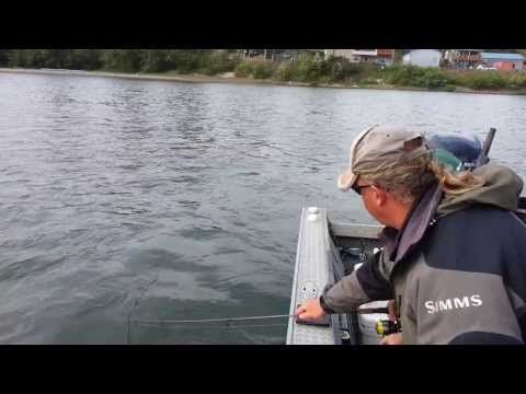 Ashwin Fishing King Salmon Cowlitz River Sep 20 2013
