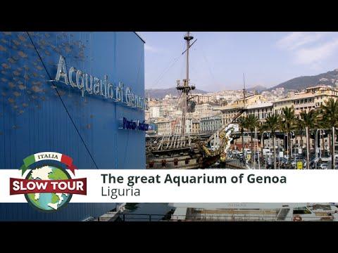 Aquarium of Genoa: meet manatees, sharks, dolphins and penguins | Italia Slow Tour |