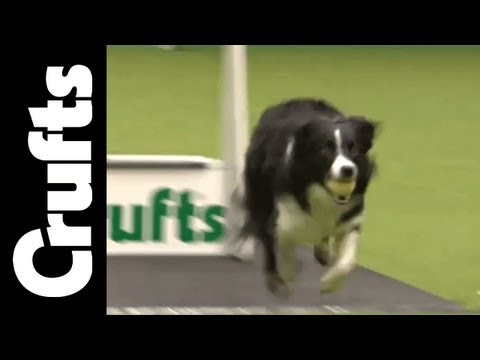 Flyball - Team Quarter Finals - Day 1 - Crufts 2012