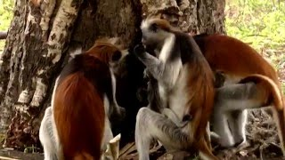 Animals Like Us : Animal Medicine - Wildlife Documentary