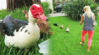 OUR NEW PET DUCKS! (Rescued) - Super Cooper Sunday #155