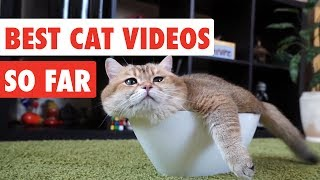Best Cat Videos of the Year So Far | Funny Cat Video Compilation 2017