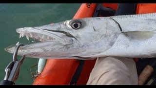 Big Kayak Barracuda - Florida Keys Fishing