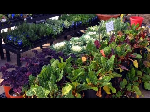 How to have a Weed-Free Organic Vegetable Garden!