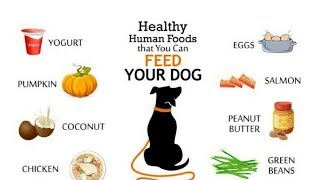 Top 10 Best Healthy Food For Dog In India| Neha Preet