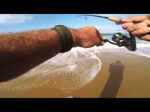 Surf Fishing For Spotfin Croaker California