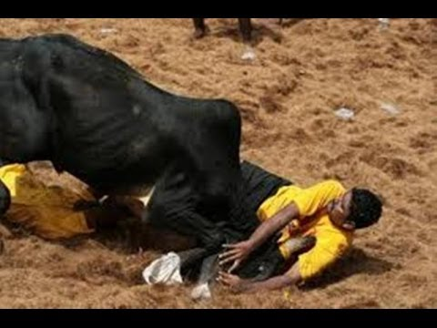 Alanganallur Jallikattu 2014  Best Moments video