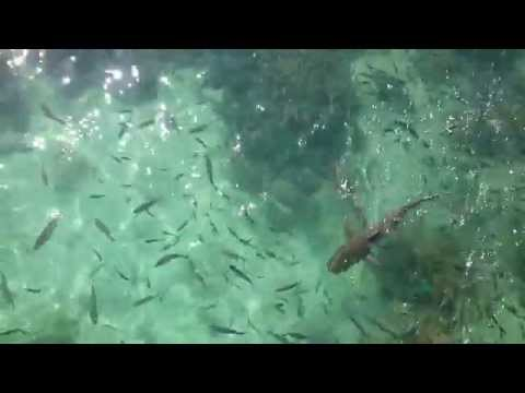 マレーシア・パヤ島 - Pulau Payar Marine Park, Langkawi, Malaysia. 3