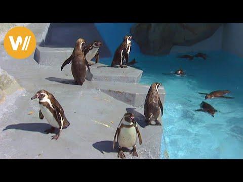 Planet Zoo - Tiere aller Kontinente | Marine animals