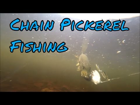 Chain Pickerel Fishing New Brunswick, Canada