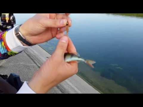 ловля рыбы на магистральном канале