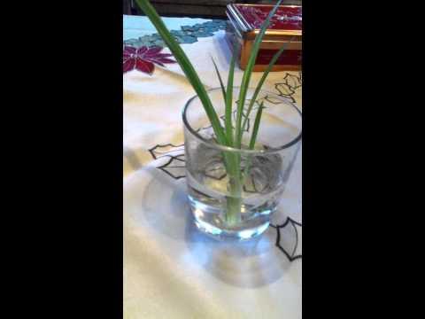 Ableger Selber Ziehen - Tipps Für Pflanzen