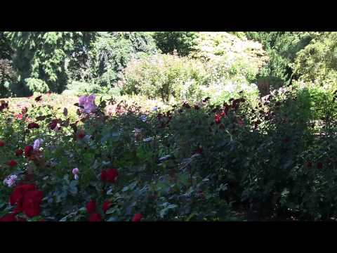 The beautiful botanical gardens of Christchurch, New Zealand. In 1080P HD