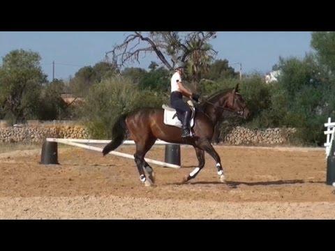 Zirkeltraining vier Sprünge zur Gymnastik des Pferdes