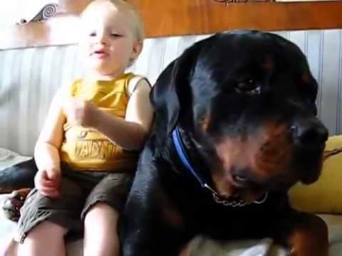 видео где ротвейлер защищает ребенка Красноярский Край