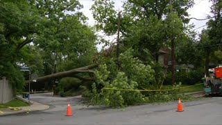 Large tree comes down during torrential rainstorm