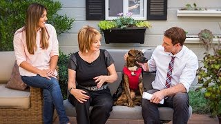 Home & Family - Car Safety Tips for Pets