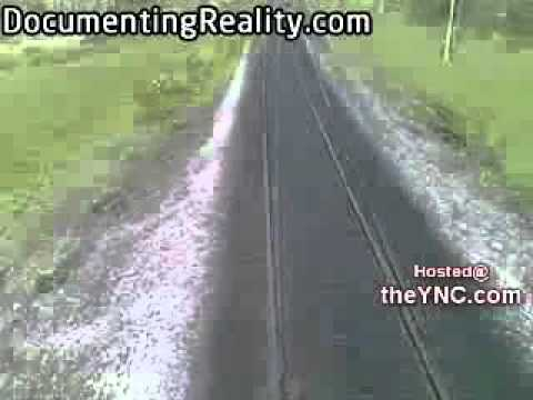 Cows Running Train Running Down Cows