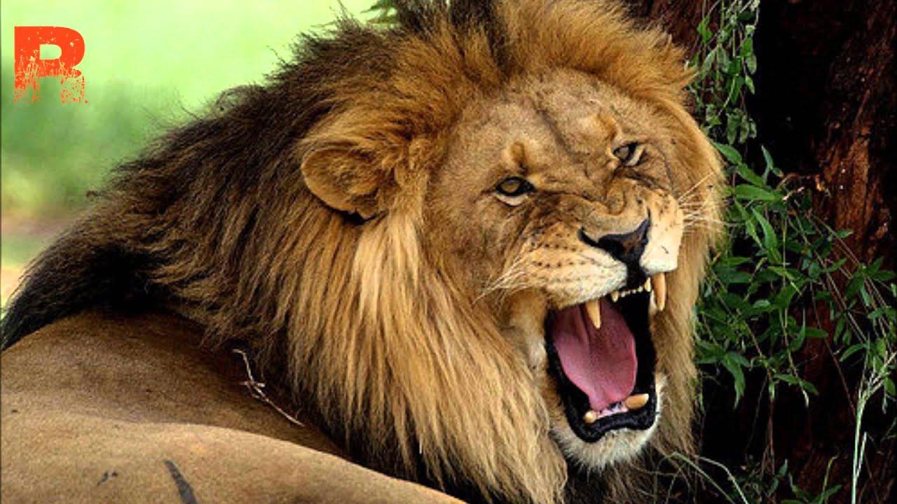 Roaring Lion Redeemed Roaring Lion