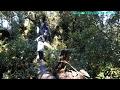 Reto de cumplido a pasar el arbol de nuevo. Aventura Extrema en El Pital. Parte 2731 -