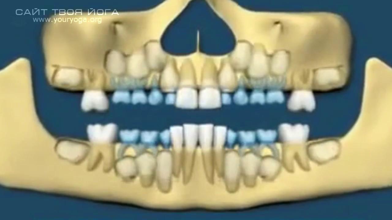 Регенерации зубов по сергею веретенникову