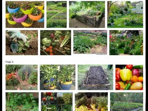 The Organic Gardener and Biocontrol