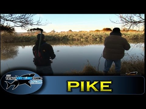 Pike fishing - Lures vs Bait - Totally Awesome Fishing!